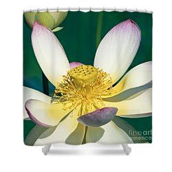 Lotus Blossom Shower Curtain by Heiko Koehrer-Wagner