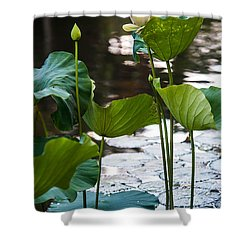 Lotuses In The Pond Shower Curtain by Jenny Rainbow