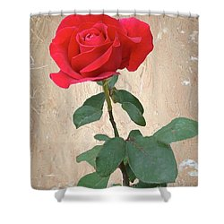 Love Is Like A Red Red Rose Shower Curtain by Janette Boyd