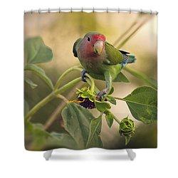 Lovebird On  Sunflower Branch  Shower Curtain by Saija  Lehtonen