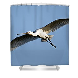 Low Angle View Of A Eurasian Spoonbill Shower Curtain by Panoramic Images
