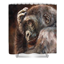 Lowland Gorilla Shower Curtain by David Stribbling