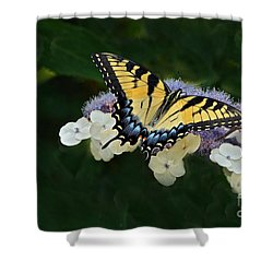 Luminous Butterfly On Lacecap Hydrangea Shower Curtain by Byron Varvarigos