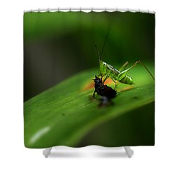 Lunch Time Shower Curtain by Michael Eingle