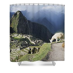 Machu Picchu And Llamas Shower Curtain by James Brunker