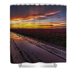 Magenta Fields Tulips Shower Curtain by Mike Reid