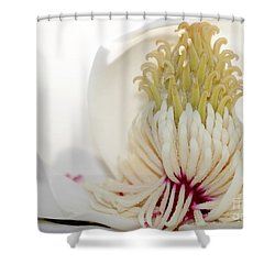 Magnolia Sticky Fingers Shower Curtain by Sabrina L Ryan
