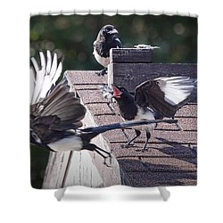 Magpie Dispute Shower Curtain by Randall Nyhof