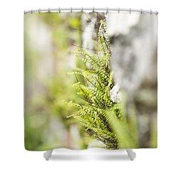 Maiden-hair Spleenwort Shower Curtain by Anne Gilbert