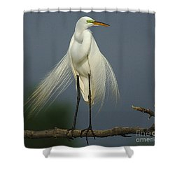 Majestic Great Egret Shower Curtain by Bob Christopher