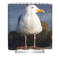 Make Sure You Get My Good Side Shower Curtain by Barbara Snyder