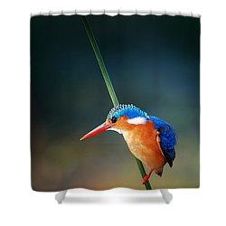 Malachite Kingfisher Shower Curtain by Johan Swanepoel
