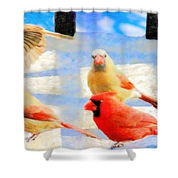 Male Cardinal With Two Females And Junco Shower Curtain by Janette Boyd