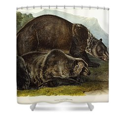 Male Grizzly Bear Shower Curtain by Audubon