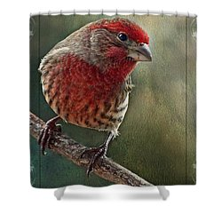 Male Housefinch With Green Texture And Decorations Shower Curtain by Debbie Portwood