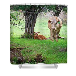 Mama Cow And Calf Shower Curtain by Mary Lee Dereske