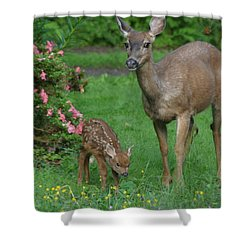Mama Deer And Baby Bambi Shower Curtain by Kym Backland