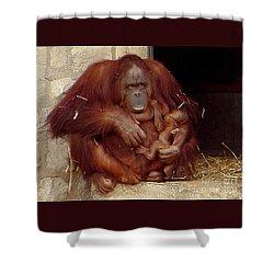 Mama N Baby Orangutan - 54 Shower Curtain by Gary Gingrich Galleries