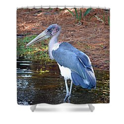 Marabou 2 Shower Curtain by Richard Bryce and Family