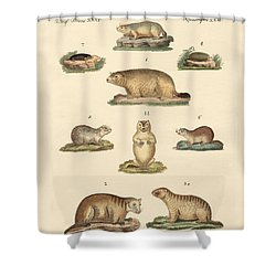 Marmots And Moles Shower Curtain by Splendid Art Prints