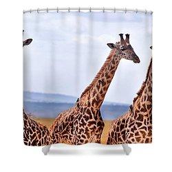 Masai Giraffe Shower Curtain by Adam Romanowicz