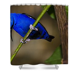 Masked Blue Bird Shower Curtain by Penny Lisowski