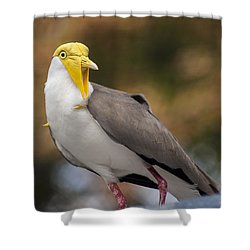 Masked Lapwing Shower Curtain by Carolyn Marshall