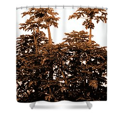 Maui Coconut Palms Shower Curtain by J D Owen