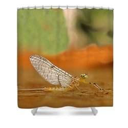 Mayfly Art Shower Curtain by Thomas Young