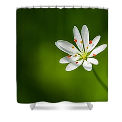 Meadow Candy - Featured 3 Shower Curtain by Alexander Senin