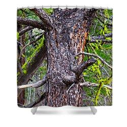 Medusa Tree Shower Curtain by Omaste Witkowski