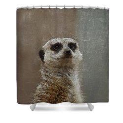 Meerkat 5 Shower Curtain by Ernie Echols