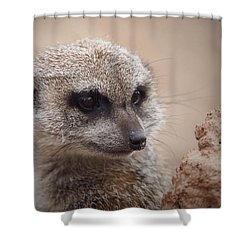Meerkat 7 Shower Curtain by Ernie Echols