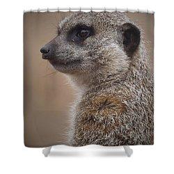 Meerkat 9 Shower Curtain by Ernie Echols
