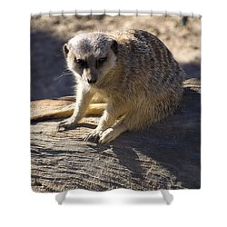 Meerkat Resting On A Rock Shower Curtain by Chris Flees