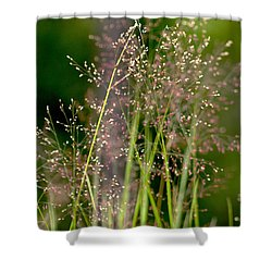 Memories Of Springtime Shower Curtain by Holly Kempe