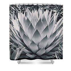 Mescal Agave Shower Curtain by Kelley King