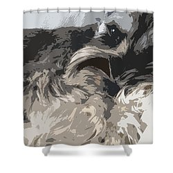 Miniature Schnauzer Shower Curtain by Sergey Sogomonyan