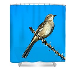 Mockingbird Shower Curtain by Robert Bales