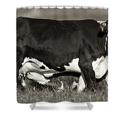 Momma Shower Curtain by Patrick M Lynch