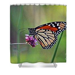 Monarch Butterfly In Garden Shower Curtain by Karen Adams