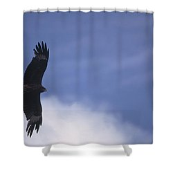 Mongolia Shower Curtain by Anonymous
