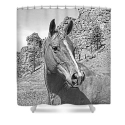 Montana Horse Portrait In Black And White Shower Curtain by Jennie Marie Schell