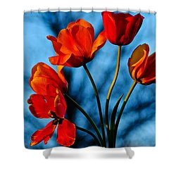 Mood Bouquet Shower Curtain by Frozen in Time Fine Art Photography