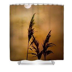 Moonlit Stalks Shower Curtain by Gary Heller