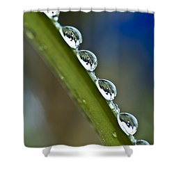 Morning Dew Drops 2 Shower Curtain by Heiko Koehrer-Wagner