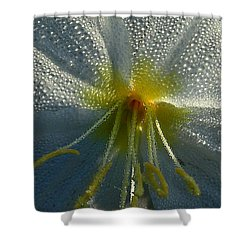 Morning Dew Shower Curtain by Steven Reed