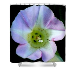 Morning Glory Floral Window Shower Curtain by Neal  Eslinger
