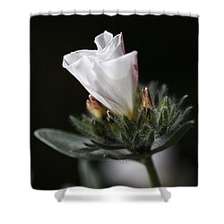 Morning Glory Shower Curtain by Joy Watson