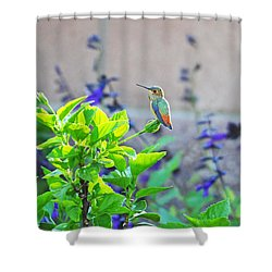 Morning Glory Shower Curtain by Lynn Bauer
